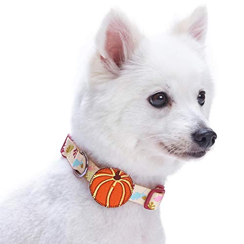 Blueberry Pet 8 Patterns Thanksgiving Fall Obsession Ginkgo Biloba Leaf Designer Dog Collar with Pumpkin, Small, Neck 12