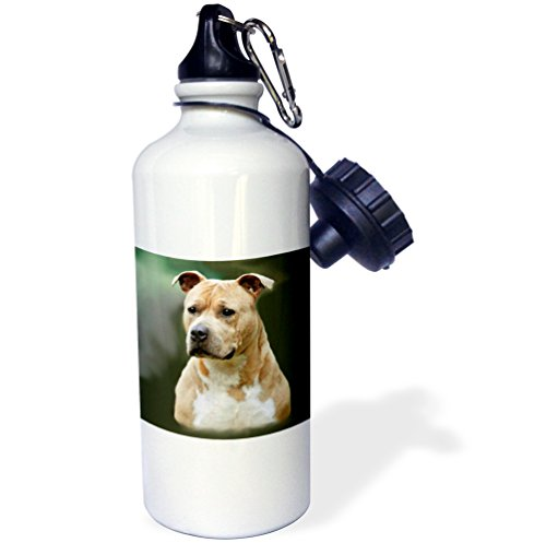 (3dRose wb_4253_1 American Staffordshire Terrier Sports Water Bottle, 21 oz, White)