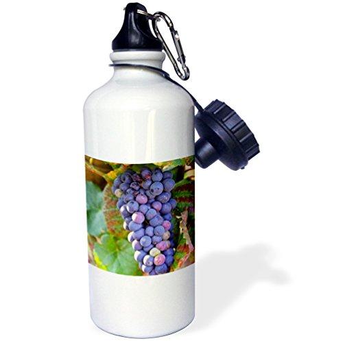 "3dRose wb_81570_1""Pinot Noir vineyard, Chambertin, Bourgogne, France EU09 PKA0626 Per Karlsson"" Sports Water Bottle, 21 oz, White"