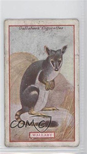 Wallaby COMC REVIEWED Good to VG-EX (Trading Card) 1921 Gallaher Animals & Birds of Commercial Value - Tobacco [Base] #84 from Gallaher Animals & Birds of Commercial Value