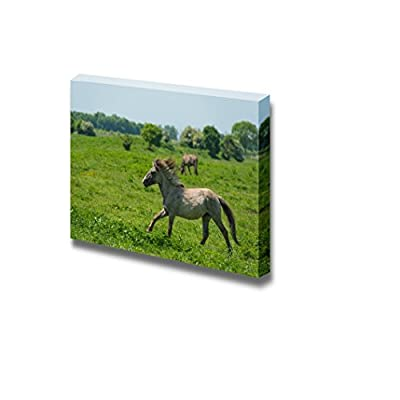 Canvas Prints Wall Art - Wild Horse Running in a Sunny Meadow/Grassland | Modern Wall Decor/Home Art Stretched Gallery Wraps Giclee Print & Wood Framed. Ready to Hang - 12