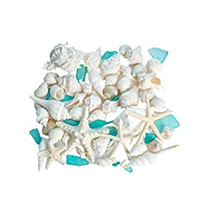 4165U5huj%2BL._SS300_ Best Seashell Wedding Decorations