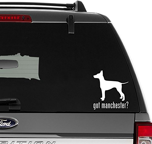Got Manchester Terrier Dog Pet Vinyl Decal Sticker For Wall Decor, Windows, Laptop, Car, Truck, Motorcycle, Vehicles (Size-6 inch/15 cm Tall) - (Gloss WHITE Color)