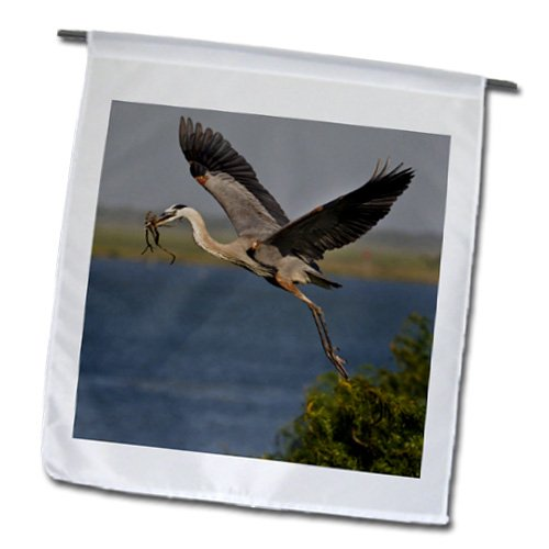 Laguna Outdoor Pillow (3dRose fl_147002_1 Great Blue Heron Bird with Nest Material, Texas, USA-US44 LDI0896-Larry Ditto Garden Flag, 12 by)