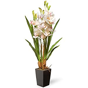 National Tree White Orchid Flowers 79