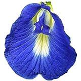 アントシアニンを豊富に含む バタフライピー (一重咲きの花) 種 36粒