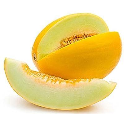 Mid-Grade Golden Melon gragant Juicy Seeds Fruits Organic from Ukraine 2 Grams : Garden & Outdoor