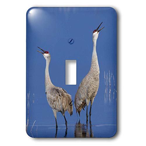 Calling Crane - 3dRose Danita Delimont - Birds - Sandhill Cranes calling - double toggle switch (lsp_313967_2)