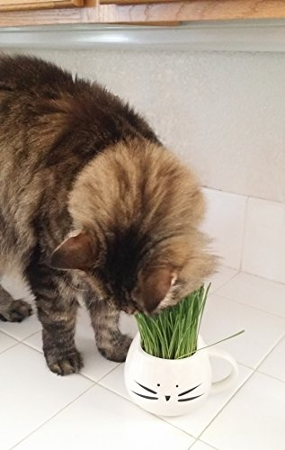 100-Organic-pet-grass-kitcat-grass-kit-with-cat-grass-planter-Natural-hairball-control-and-hairball-remedy-for-cats-Natural-digestive-aid-Includes-planter-Organic-seed-mix-and-organic-soil