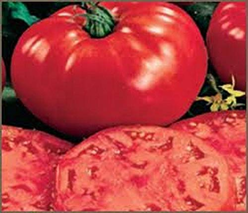 Beefsteak Tomato Seeds - HUGE and GREAT Tasting.!!!(10 - Seeds) ()