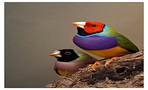 320754-finches travel sites Postcard Post card