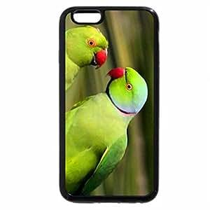 iPhone 6S Plus Case, iPhone 6 Plus Case, Ring-necked Parakeet