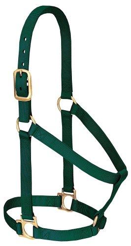Weaver Leather Basic Non-Adjustable Nylon Horse Halter, Hunter Green, 1