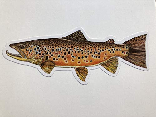 Pescador on the Fly | Trout Species Decals | Fly Fishing Stickers Designed by Jeff Currier | Great Gift Idea for Fisherman Waterproof Vinyl Stickers | Brown Trout | 10 Inch