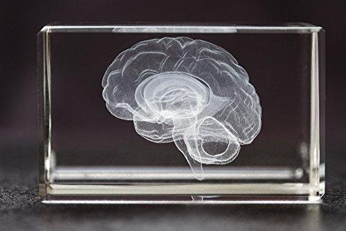 Paperweight Award - Anatomy Crystal (Brain 1lb)
