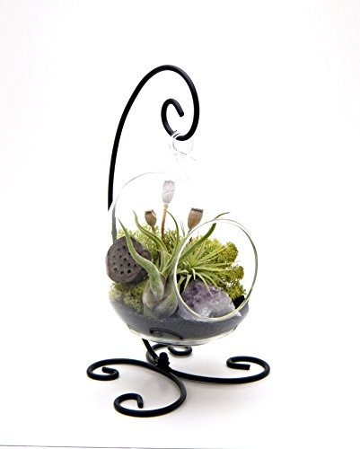 Bliss Gardens Air Plant Terrarium Kit with Amethyst 6 Oval Glass With Black Stand Tillandsia Gift Midnight Forest