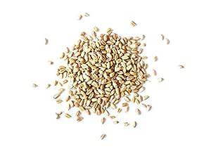 Granos de trigo, 25 Libras - Brotando para Wheatgrass, Kosher ...