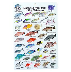 Water proof fish species guide to reef fish of the bahamas for Fish representative species