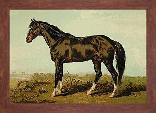 Dongola Horse, 1900 by Samuel Sidney - 17
