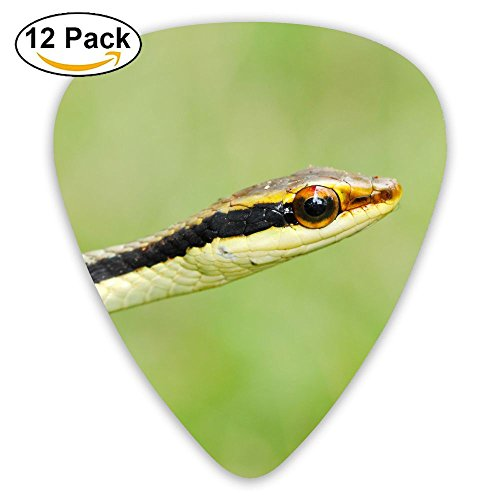 Big Eyes Snake DIY MGuitar Picks 12-Pack Set Celluloid Medium Paddles Plectrums 0.46mm/ 0.71mm/ 0.96mm Instruments Bass For Guitarist (Snake Eyes Players)