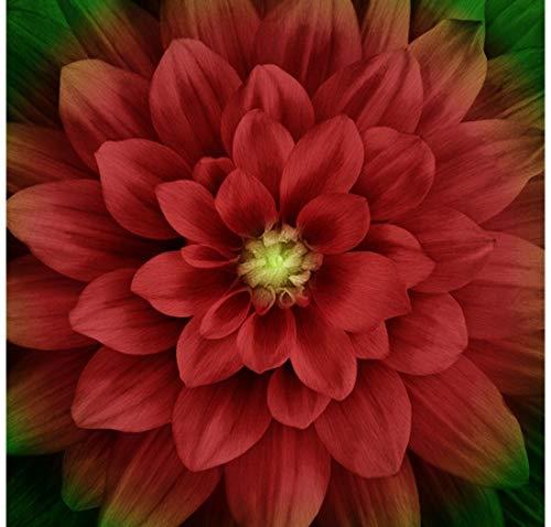 Dream Big - Digital Panel #P4389-78 Scarlett Large Floral -Scarlett- by Hoffman Fabrics
