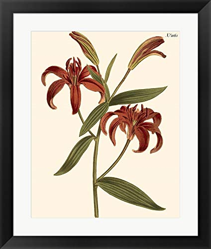 Fiery Florals I by Samuel Curtis Framed Art Print Wall Picture, Black Frame, 20 x 24 inches