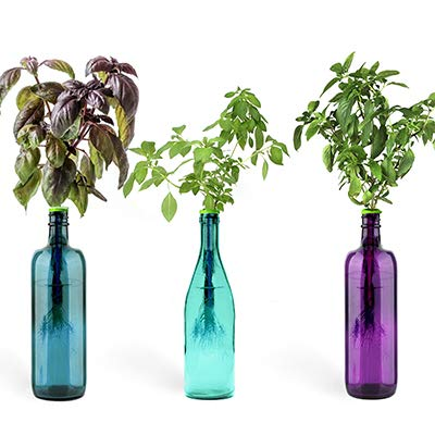 Indoor Herb Garden Starter Kit: Exotic Basils Kitchen Window Sill Garden Kit with Purple Basil, Thai Basil and Lime Basil Seeds - Fresh Herbs At Home Planter - Small Growing ()