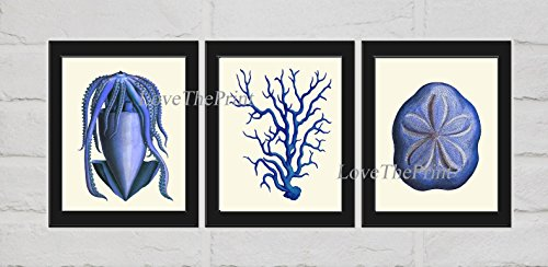 Ocean Life Print Set of 3 Art Prints Beautiful Antique Blue Squid Coral Sand Dollar Ivory Background Marine Nature Coastal Bathroom Bedroom Beach Home Room Wall Decor Unframed NOD