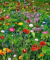 The Dirty Gardener Northeast Wildflower Seed Mix - 1 Pound