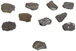 American Educational Plant Fern Leaf Impressions Fossil (Pack of 10)