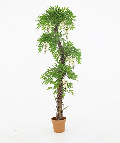 Wisteria Flowering Tree - 2