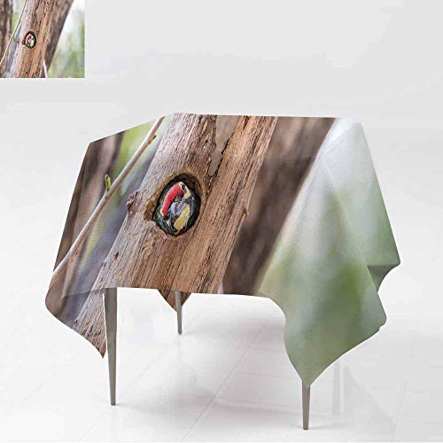 AFGG Washable Square Tablecloth,Bird (Coppersmith Barbet Crimson-Breasted Barbet Coppersmith,Great for Buffet Table, Parties& More,70x70 Inch Meg]()