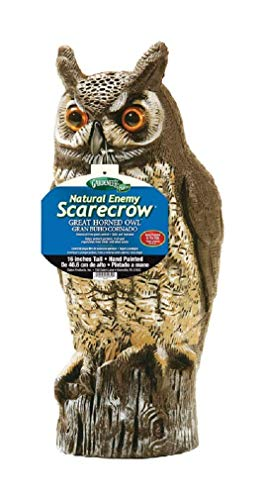 Dalen 016069000301 OW6 Gardeneer by Natural Enemy Scarecrow Horned Owl (Best Way To Keep Squirrels Out Of Garden)