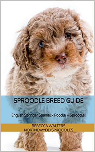 Springer Spaniel Poodle - Sproodle Breed Guide: English Springer Spaniel x Poodle = Sproodle!