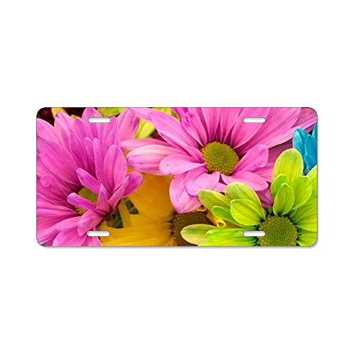 - Teisyouhu Colorful Daisies Decorative License Plate Frame Auto Tag for Front of Car Stainless Steel Car Holder