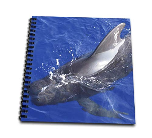 InspirationzStore写真–Pilot Whale Sea Life動物写真–ハワイWhalesハワイアンブルーオーシャンAquatic Marine Biology–Drawing Book 4x4 notepad db_112966_3