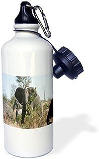 liandun sur Elefantes africanos comiendo hojas Botella de agua deportiva, Rojo, Color blanco