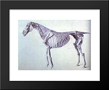Amazon Diagram From The Anatomy Of The Horse 20x24 Framed Art