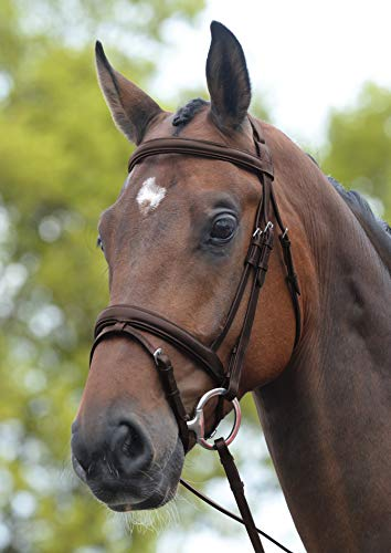 (Kincade Flash Bridle Brown Full )