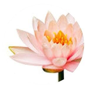 alfombrilla de ratón aislado flor de loto - ronda - 20cm