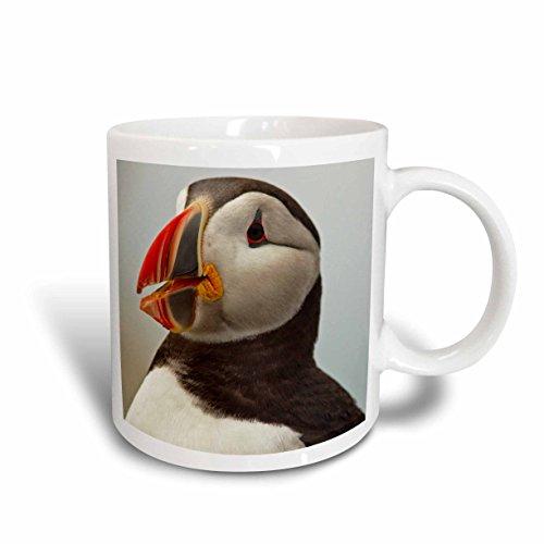 3dRose 90617_2 Atlantic Puffins, Machias Seal Island, Cutler, Maine-US20 CHA0008-Chuck Haney Ceramic Mug, 15 oz, White