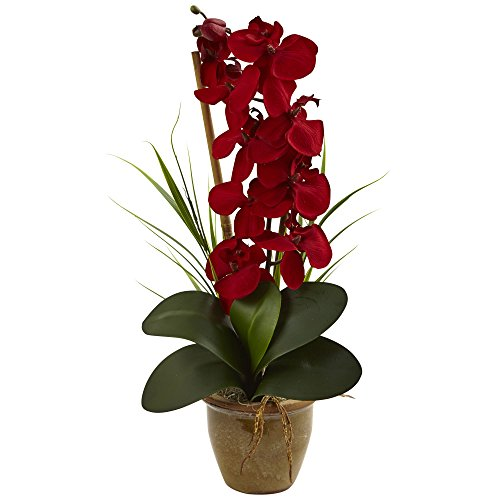 Flower Orchid Phalaenopsis (Nearly Natural Phalaenopsis Orchid Silk Arrangement Red)