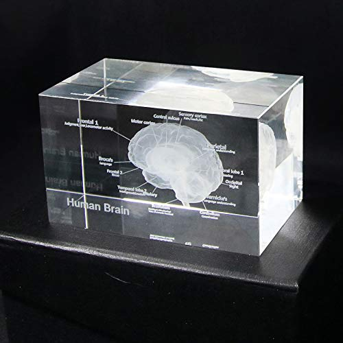 (ZAMTAC 3D Human Anatomical Model Brain Crystal Glass Cube Anatomy Mind Neurology Thinking Paperweight Laser Etched Medical Science Gift - (Size:)