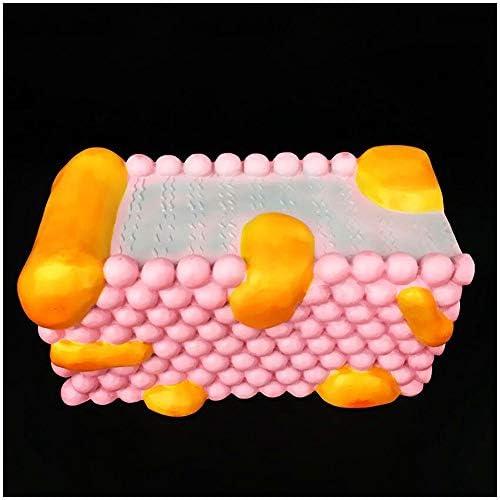 LUCKFY Celular Modelo - Membrana Celular Estructura Modelo ...