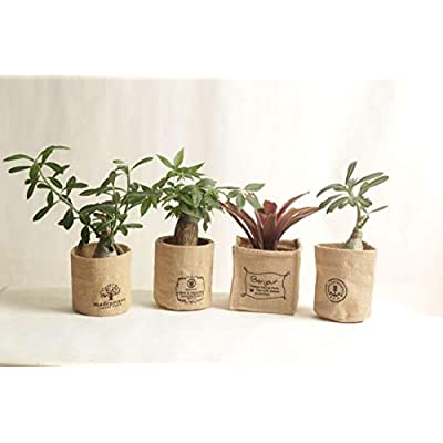 3PCS Grow pots, Breathable Plant Bags, Specail for adenium, no Plants, USA : Garden & Outdoor