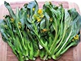 Yu Choy Sum (green stem)-Very tender and delicious - Grows fast and vigorously! (100 - Seeds)