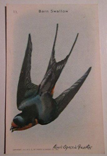 Useful Birds of America #11 Barn Swallow - 10th Series 1938 (Church & Dwight Co. & Arm & Hammer)