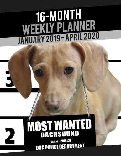 (2019-2020 Weekly Planner - Most Wanted Dachshund: Daily Diary Monthly Yearly Calendar Large 8.5