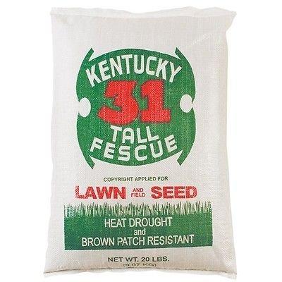 Kentucky 31 Tall Fescue Grass 5lb of Quality Grass Seed 2018 Planting Season