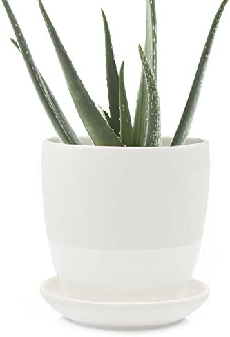 Chive – Big Dyad, Large 5 Inch Succulent Pot and Saucer – Ceramic Plant Pot with Drainage Hole and Detachable Saucer, Tray and Dish White